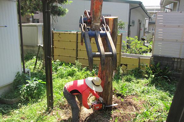 樹木伐採、抜根